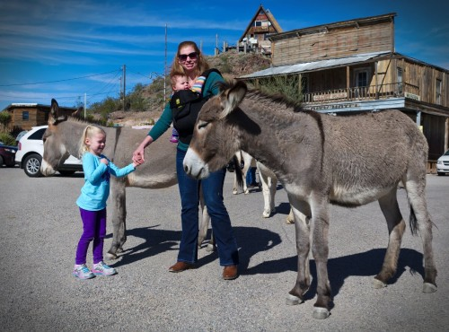 Petting the Burros in Oatman, AZ
